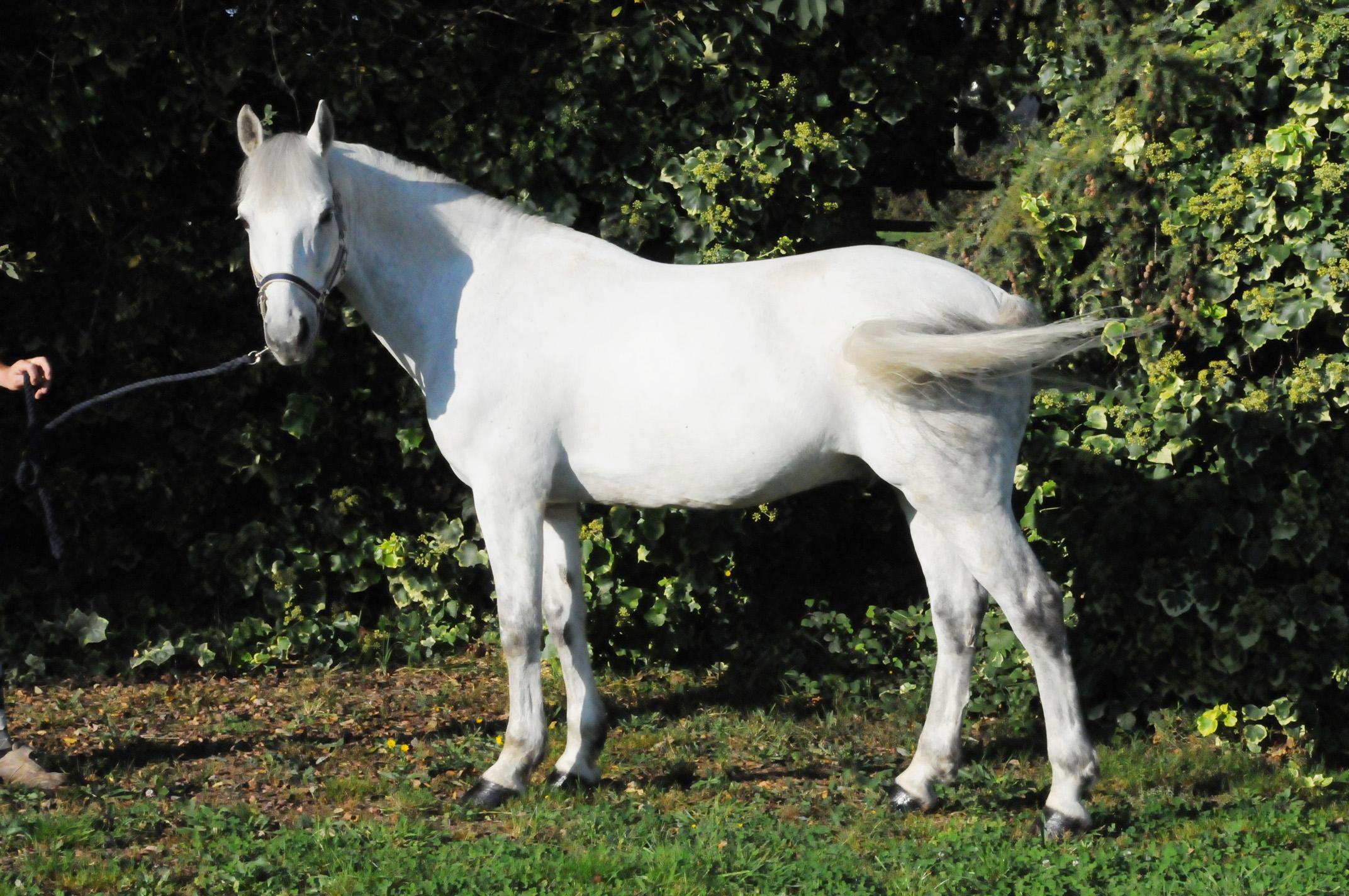 poney ou cheval a vendre